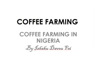 Day1-IshakuDavouFei,CoffeeFarming-Coffee-Farming-in-Nigeria