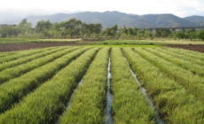 African youth crucial for modernising agricultural sectors