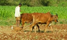 New opportunities for Kenya's agriculture sector
